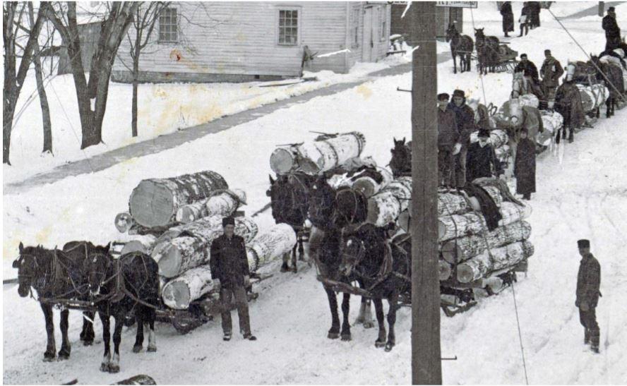 Horses pulling log sleds